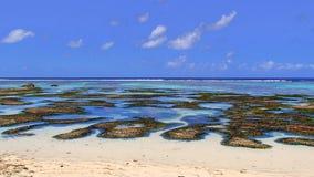 Bacias da água pouco profunda às praias dreamlike dos seychelles foto de stock
