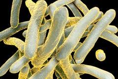 Bacille de la tuberculose de bactéries illustration stock