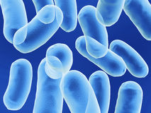 Bacillus bacteria. Cells on blue background Royalty Free Stock Image
