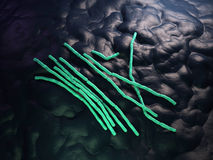The Bacillus cereus - close up Stock Images