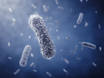 Bacillus Royalty Free Stock Photos