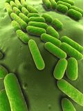 Bacillus subtilis Royalty Free Stock Photos