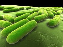 Bacillus subtilis Royalty Free Stock Photo