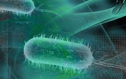 Bacilo bactérias Imagem de Stock Royalty Free
