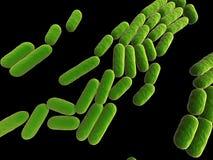 Bacilo subtilis Foto de archivo libre de regalías