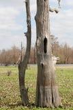 Bacino Cypress di Atchafalya Immagini Stock