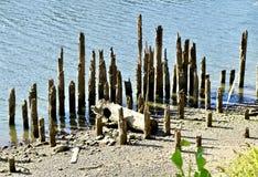 Bacino decomposto sulle sponde del fiume, Portland, Oregon, U.S.A. fotografie stock libere da diritti