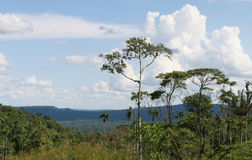 Bacino del Amazon Fotografie Stock