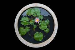 Bacino del fiore isolato Fotografia Stock Libera da Diritti