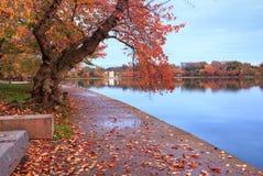 Bacino di marea Autumn Scene del Washington DC Immagine Stock Libera da Diritti