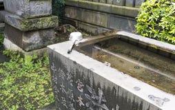 Bacino e siviera di pietra dell'acqua al santuario shintoista a Tokyo, Giappone Immagini Stock