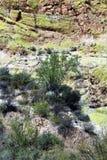 Bacino idrico del lago saguaro, la contea di Maricopa, Arizona, Stati Uniti immagini stock libere da diritti