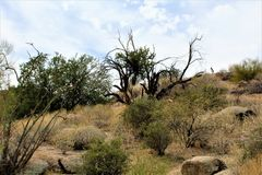 Bacino idrico di Bartlett Lake, la contea di Maricopa, stato vista scenica di Arizona, paesaggio degli Stati Uniti immagini stock