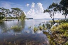 Bacino idrico di Minneriya, Sri Lanka Fotografia Stock Libera da Diritti
