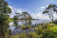 Bacino idrico di Minneriya, Sri Lanka Fotografie Stock