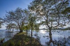 Bacino idrico di Minneriya, Sri Lanka Immagine Stock Libera da Diritti