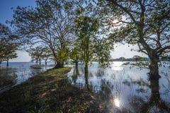 Bacino idrico di Minneriya, Sri Lanka Fotografie Stock Libere da Diritti