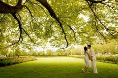 Bacio sotto l'albero Immagini Stock