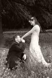 Bacio Wedding Fotografia Stock Libera da Diritti