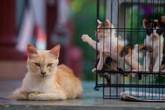 Back alley cats 1. My Neighbor's cats in the back alley stock images
