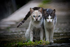 Back alley cats 1. My Neighbor's cats in the back alley royalty free stock photography