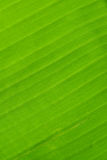 Back of banana leaf texture background Royalty Free Stock Photography