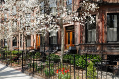 Back Bay brownstones in the spring. Exterior of Back Bay brownstones in the spring Royalty Free Stock Photos