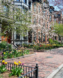 Back Bay in the Spring Royalty Free Stock Photography