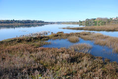 Back bay wetland/estuary at Newport Beach California. View of the upper part of back bay wetland/estuary at Newport Beach California. This area is an important Royalty Free Stock Image