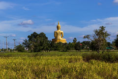 Back of big golden buddha statue sitting with foreground on rice field Royalty Free Stock Images