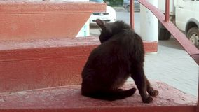Back of Black cat licks  on a red staircase stock video footage