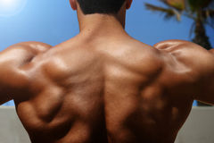 Back of bodybuilder royalty free stock photos