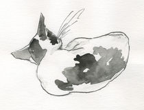 back cat sleeping watercolour Стоковые Фото