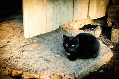 Black cat staring. At you, sunset lit, in front of the door Royalty Free Stock Photography