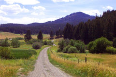 Back Country Road. A back country gravel road set in mountains of Montana flanked with summer grasses brush and pines trees stock photography