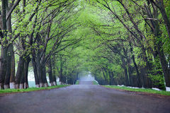 Back country road. On a misty rainy day Royalty Free Stock Images