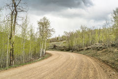 Back country road with aspen grove Stock Photography