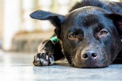 back dog sat down Royalty Free Stock Image