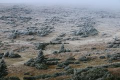 back En del av lutningen täckas med en buske med frost Royaltyfri Bild