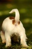 Back-end de um cachorrinho fotografia de stock