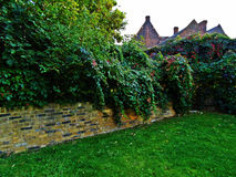 Back garden. Plants overgrowing in a backyard Royalty Free Stock Images