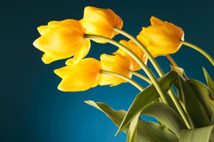Back of a gorgeous bouquet of yellow tulips Stock Images
