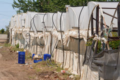 Back of greenhouses in Turkey with blue crates Stock Photo