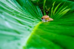 Snail on the leaf stock image