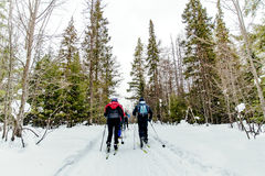Back group skiers. In pine forest in winter classic style Royalty Free Stock Image