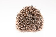 Back of a hedgehog Stock Photography