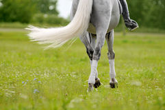 Back of horse and rider detail outdoors Royalty Free Stock Image