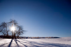 Back light winter landscape. With snow and sunlight star Royalty Free Stock Photo