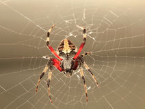 Back Lit Garden Spider on it's Web Stock Photos