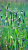 Back lit grass Stock Photos